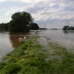 Das Wasser tritt über die Ufer.